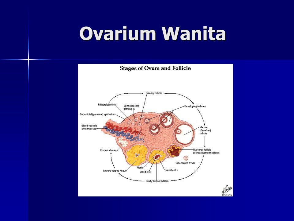 Ovarium Wanita