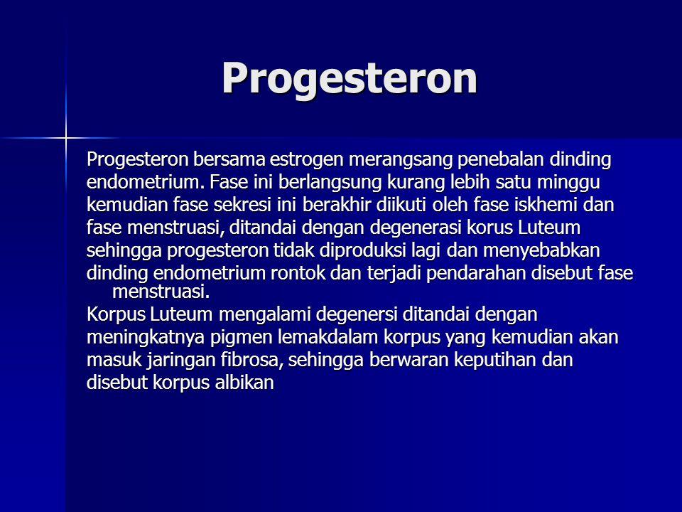 Progesteron Progesteron bersama estrogen merangsang penebalan dinding
