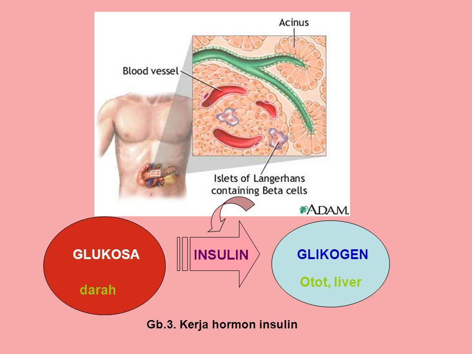 GLUKOSA INSULIN GLIKOGEN Otot, liver darah Gb.3. Kerja hormon insulin