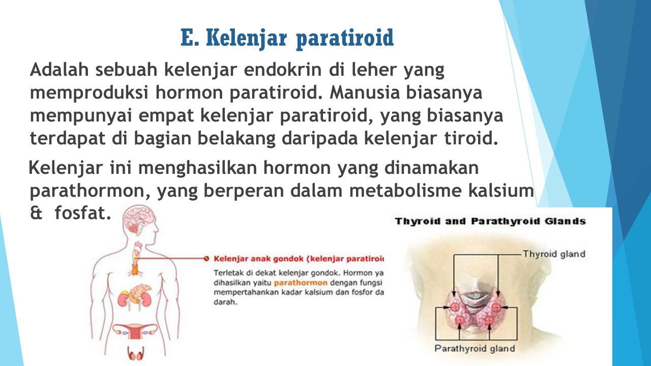 E. Kelenjar paratiroid