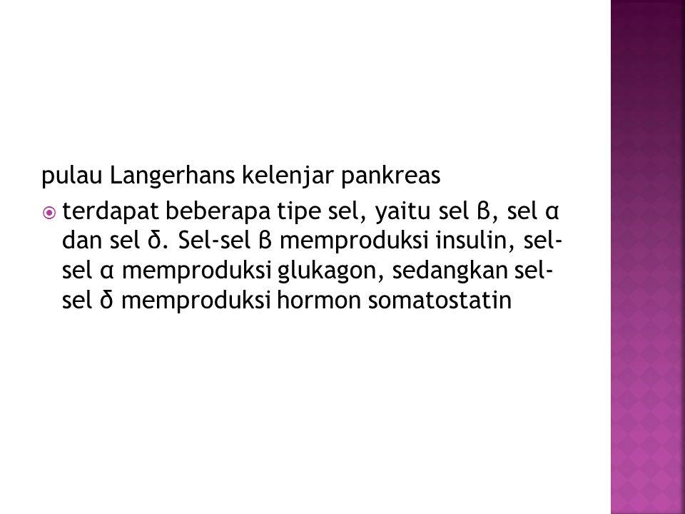 pulau Langerhans kelenjar pankreas