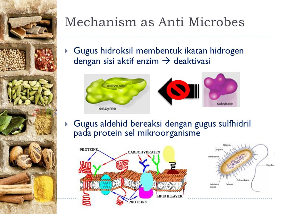 Mechanism as Anti Microbes