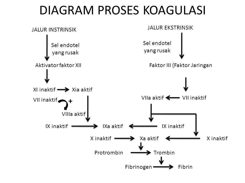 DIAGRAM PROSES KOAGULASI