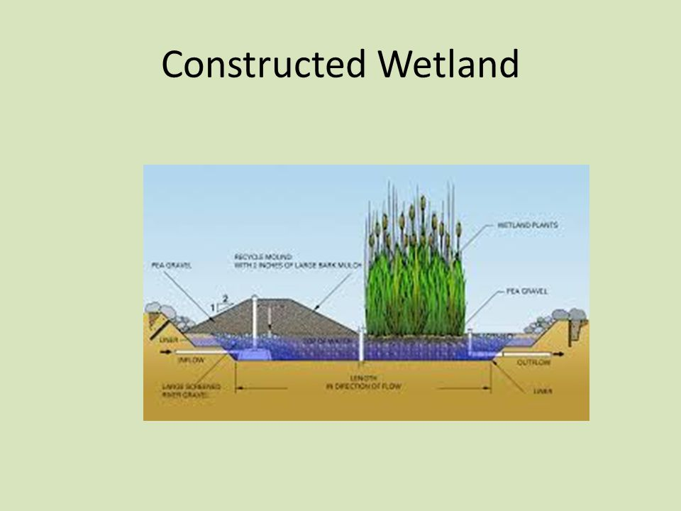 Constructed Wetland