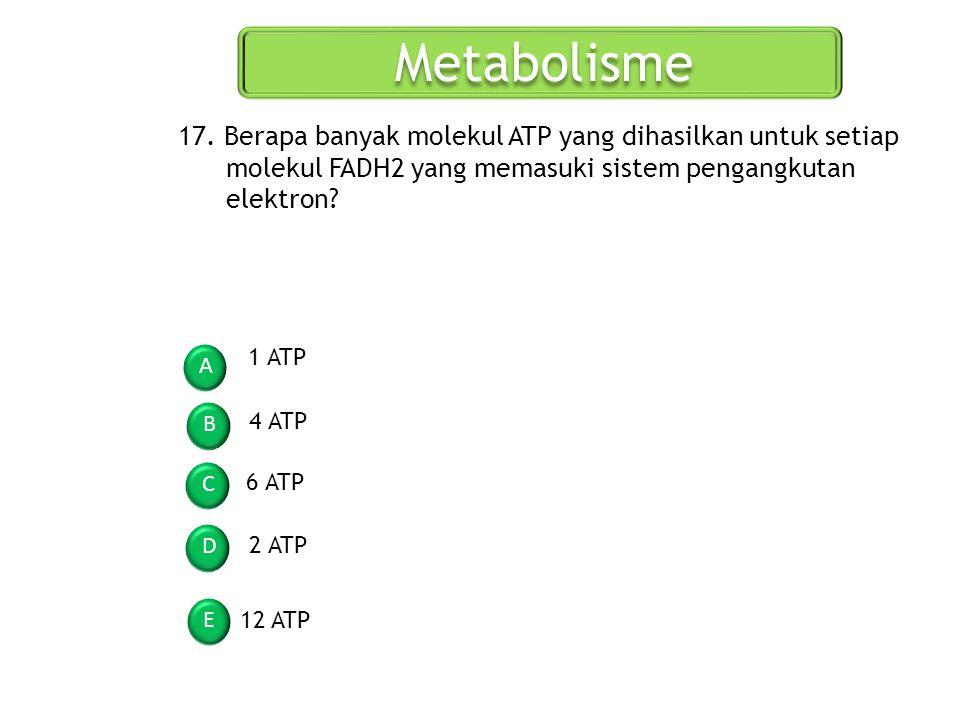 Metabolisme 17. Berapa banyak molekul ATP yang dihasilkan untuk setiap molekul FADH2 yang memasuki sistem pengangkutan elektron