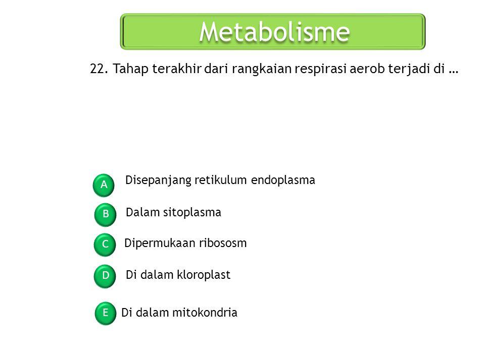 Metabolisme 22. Tahap terakhir dari rangkaian respirasi aerob terjadi di … Disepanjang retikulum endoplasma.