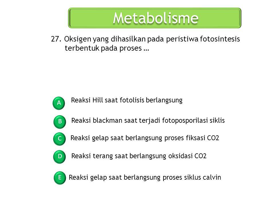 Metabolisme 27. Oksigen yang dihasilkan pada peristiwa fotosintesis terbentuk pada proses … Reaksi Hill saat fotolisis berlangsung.