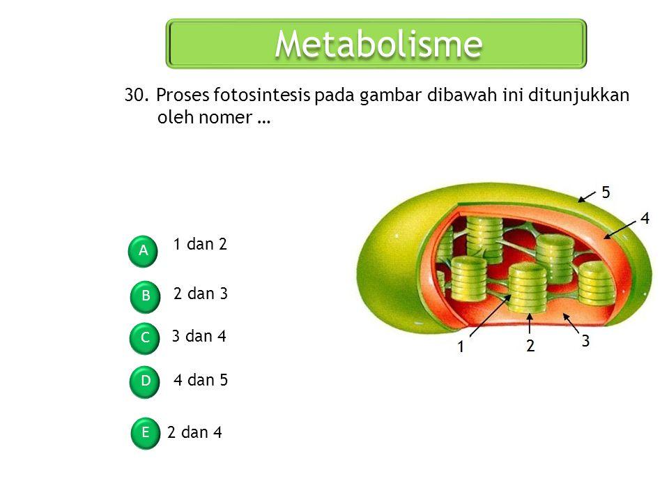 Metabolisme 30. Proses fotosintesis pada gambar dibawah ini ditunjukkan oleh nomer … 1 dan 2. A. B.