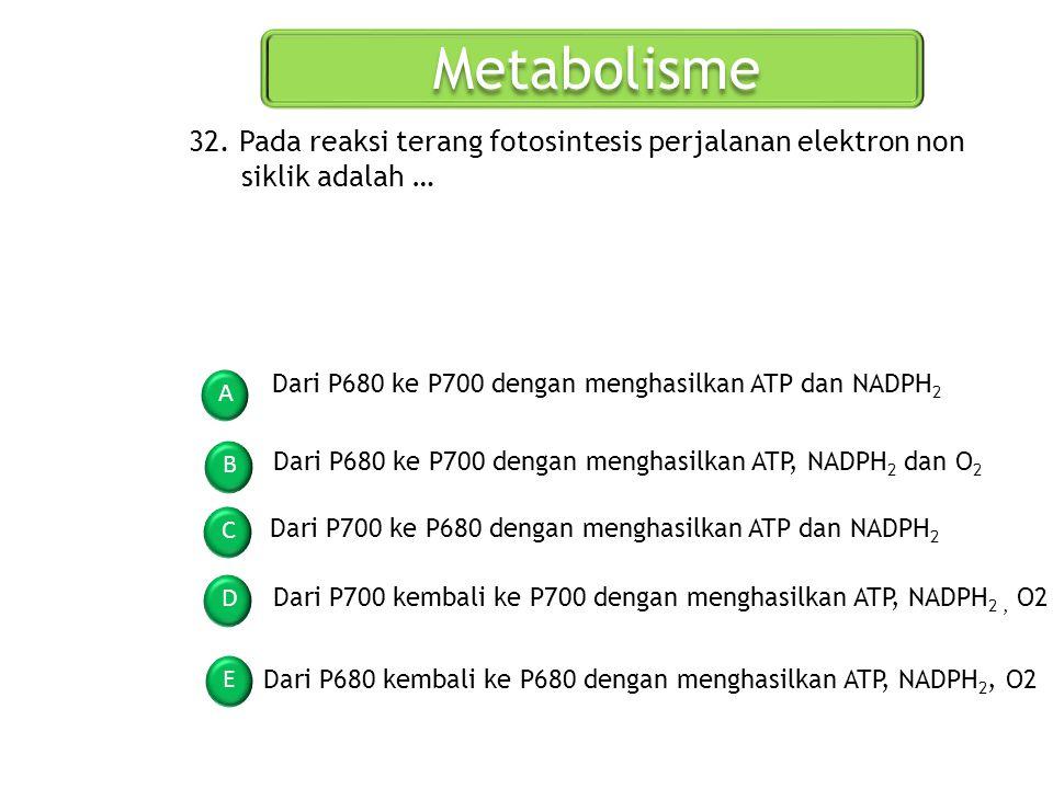Metabolisme 32. Pada reaksi terang fotosintesis perjalanan elektron non siklik adalah … Dari P680 ke P700 dengan menghasilkan ATP dan NADPH2.