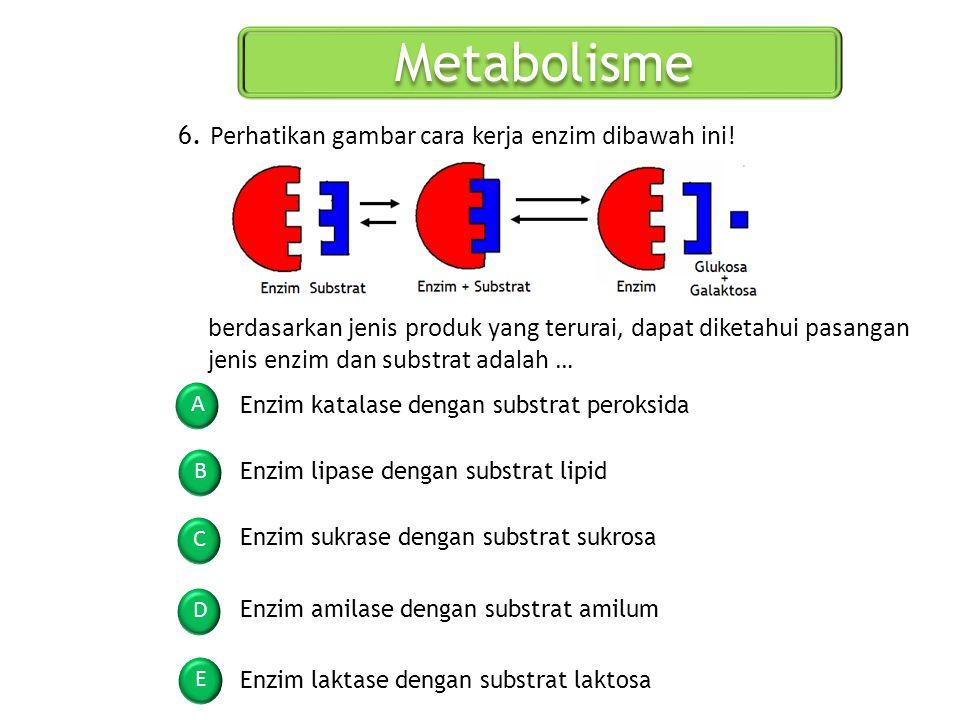Metabolisme 6. Perhatikan gambar cara kerja enzim dibawah ini!