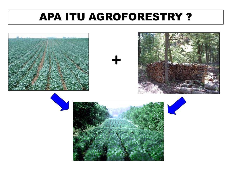 APA ITU AGROFORESTRY +