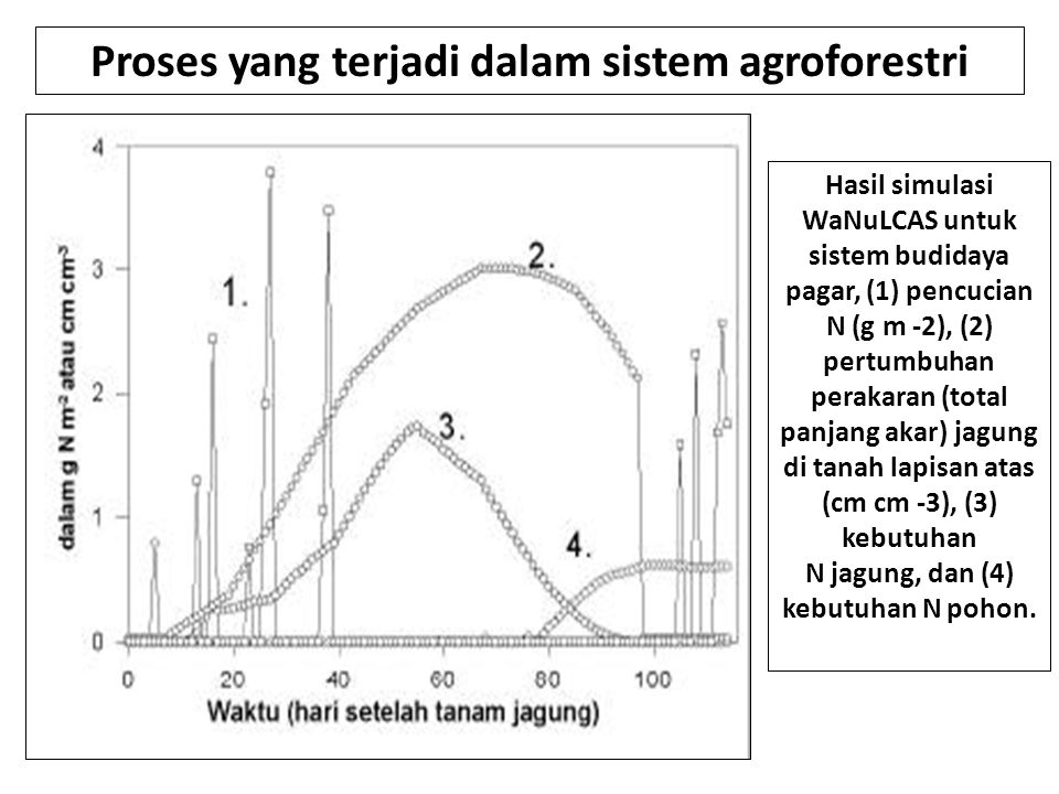 Proses yang terjadi dalam sistem agroforestri