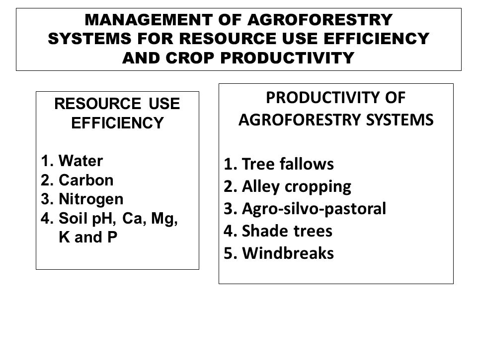 PRODUCTIVITY OF AGROFORESTRY SYSTEMS