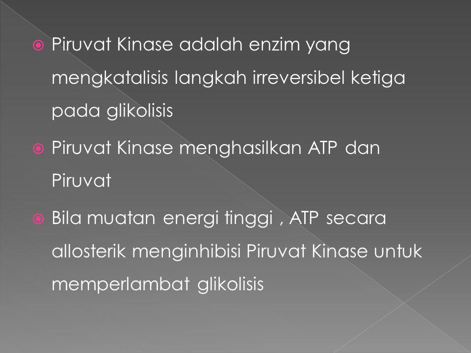 Piruvat Kinase adalah enzim yang mengkatalisis langkah irreversibel ketiga pada glikolisis