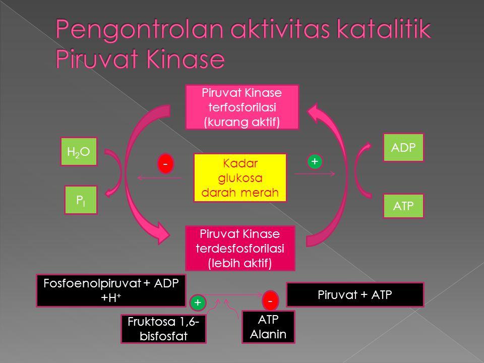 Pengontrolan aktivitas katalitik Piruvat Kinase