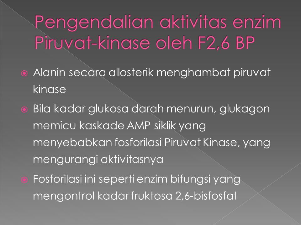 Pengendalian aktivitas enzim Piruvat-kinase oleh F2,6 BP