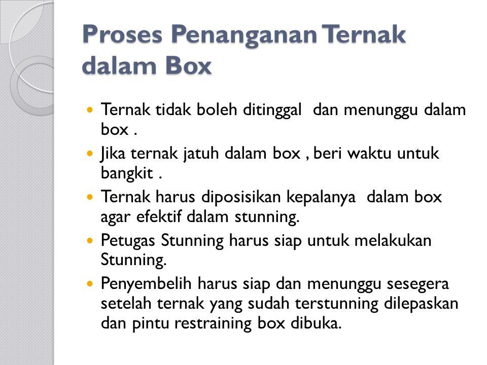 Proses Penanganan Ternak dalam Box