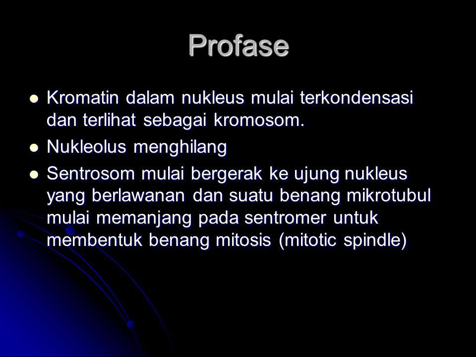 Profase Kromatin dalam nukleus mulai terkondensasi dan terlihat sebagai kromosom. Nukleolus menghilang.