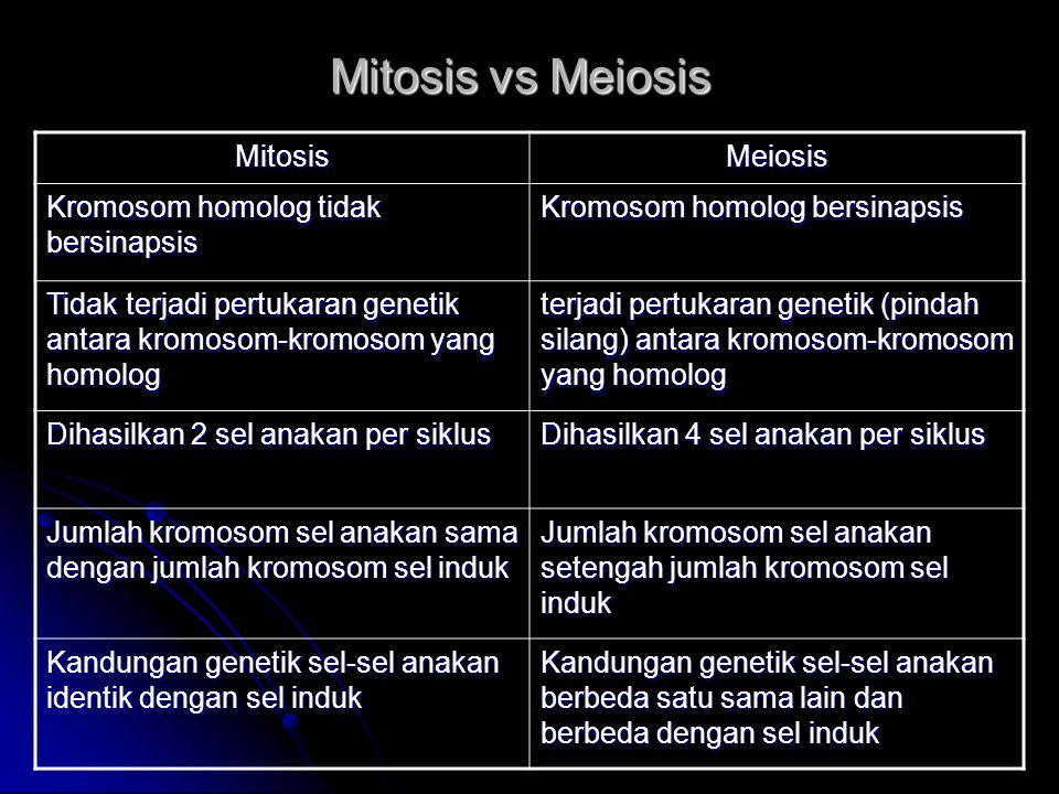Mitosis vs Meiosis Mitosis Meiosis Kromosom homolog tidak bersinapsis