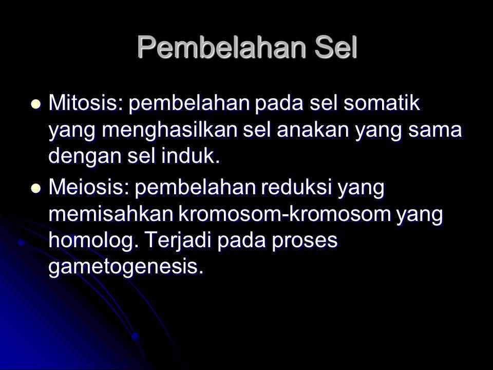 Pembelahan Sel Mitosis: pembelahan pada sel somatik yang menghasilkan sel anakan yang sama dengan sel induk.