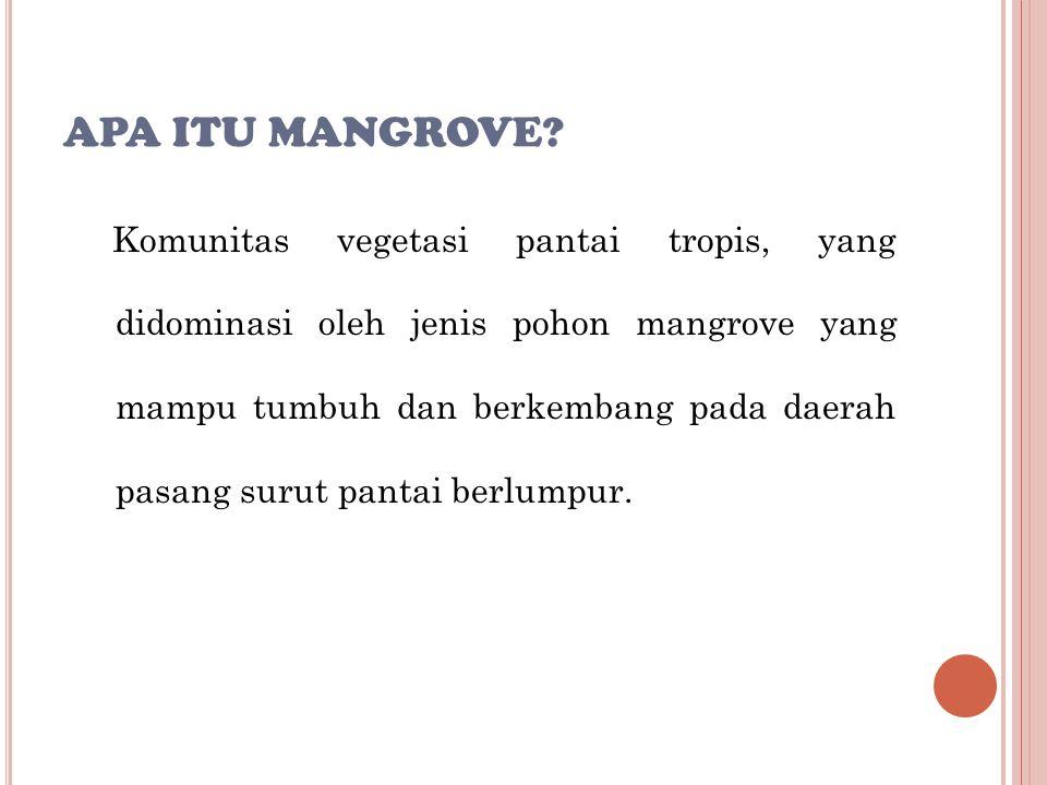 Apa itu Mangrove
