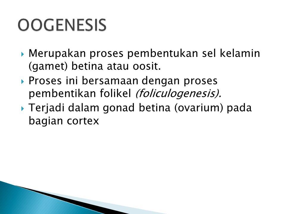 OOGENESIS Merupakan proses pembentukan sel kelamin (gamet) betina atau oosit.