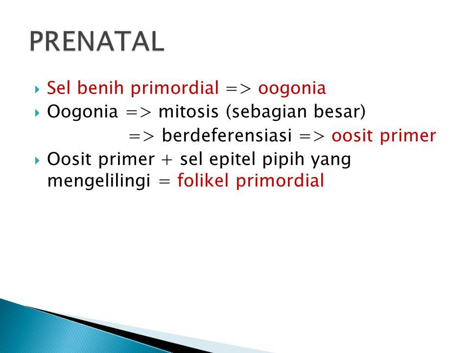 PRENATAL Sel benih primordial => oogonia