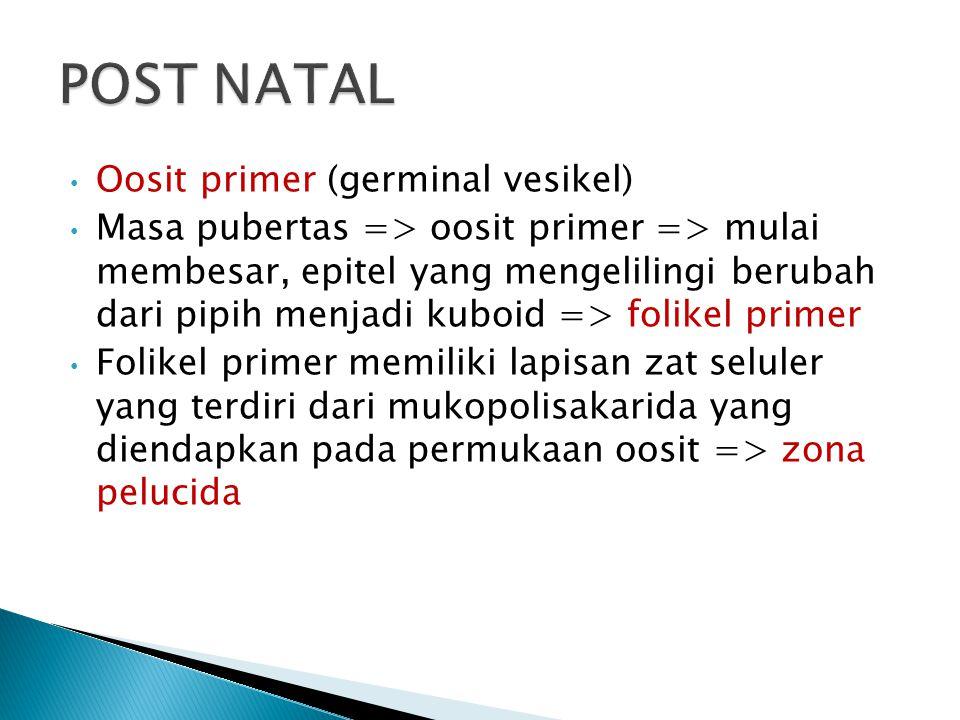 POST NATAL Oosit primer (germinal vesikel)