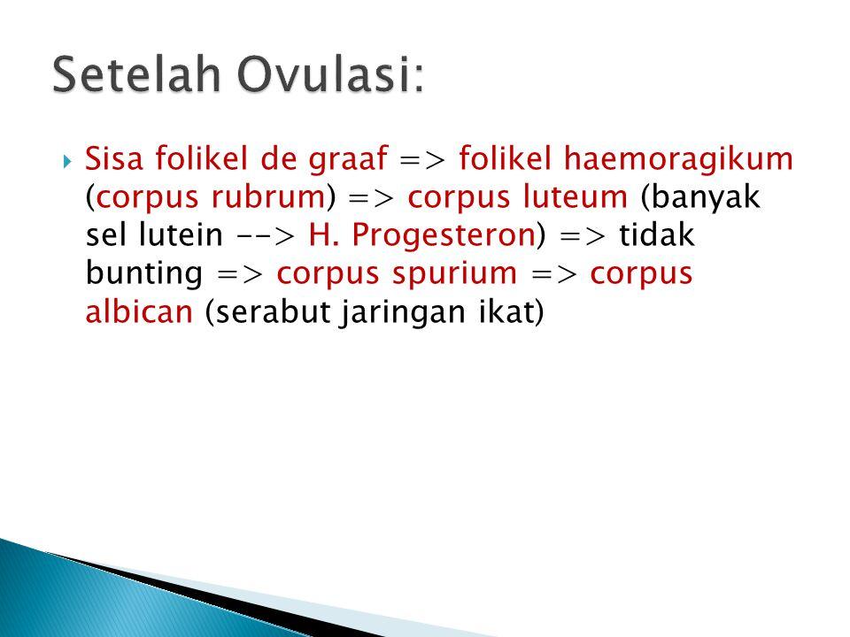 Setelah Ovulasi: