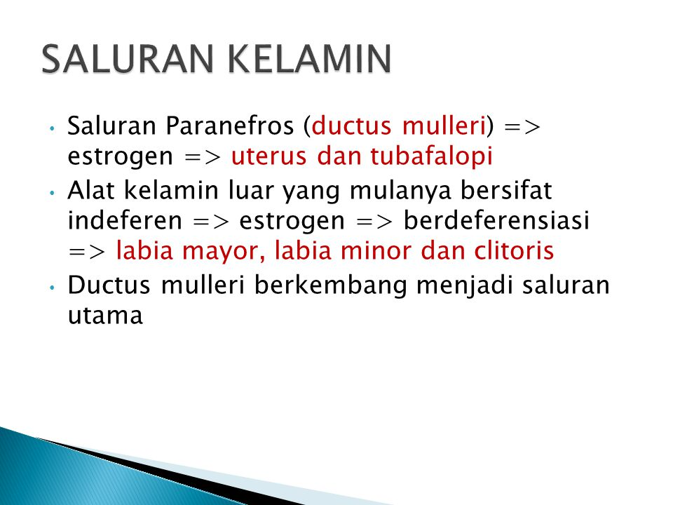 SALURAN KELAMIN Saluran Paranefros (ductus mulleri) => estrogen => uterus dan tubafalopi.