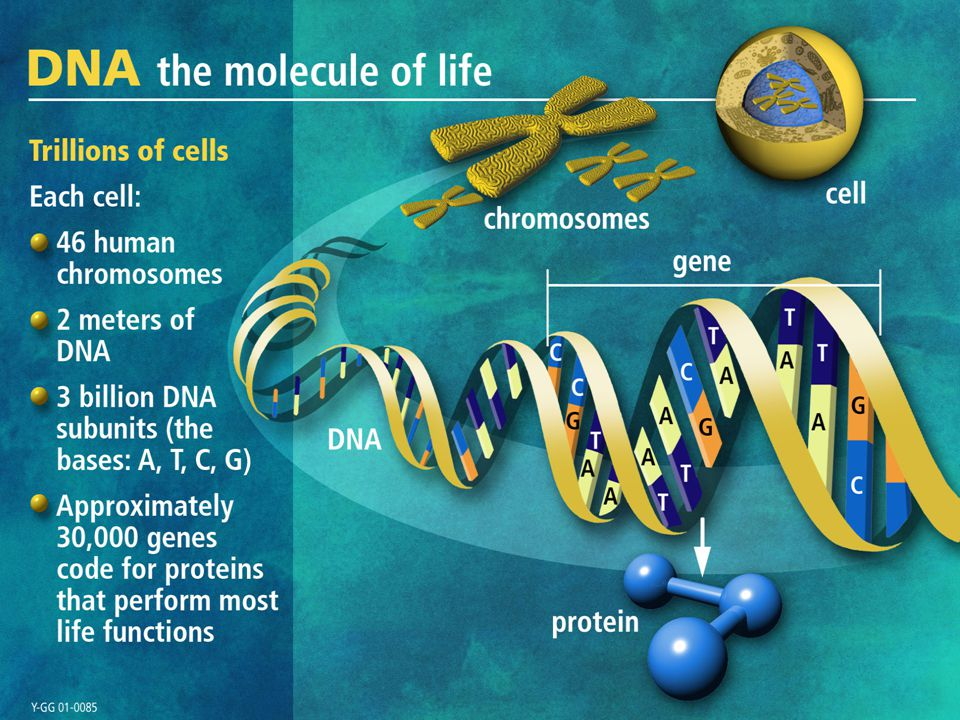 Let's start by discussing what revolutionize molecular biology, the discovery of DNA.