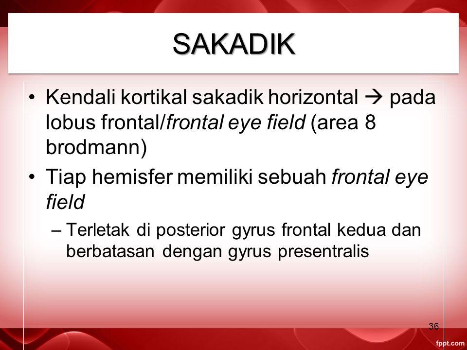 SAKADIK Kendali kortikal sakadik horizontal  pada lobus frontal/frontal eye field (area 8 brodmann)