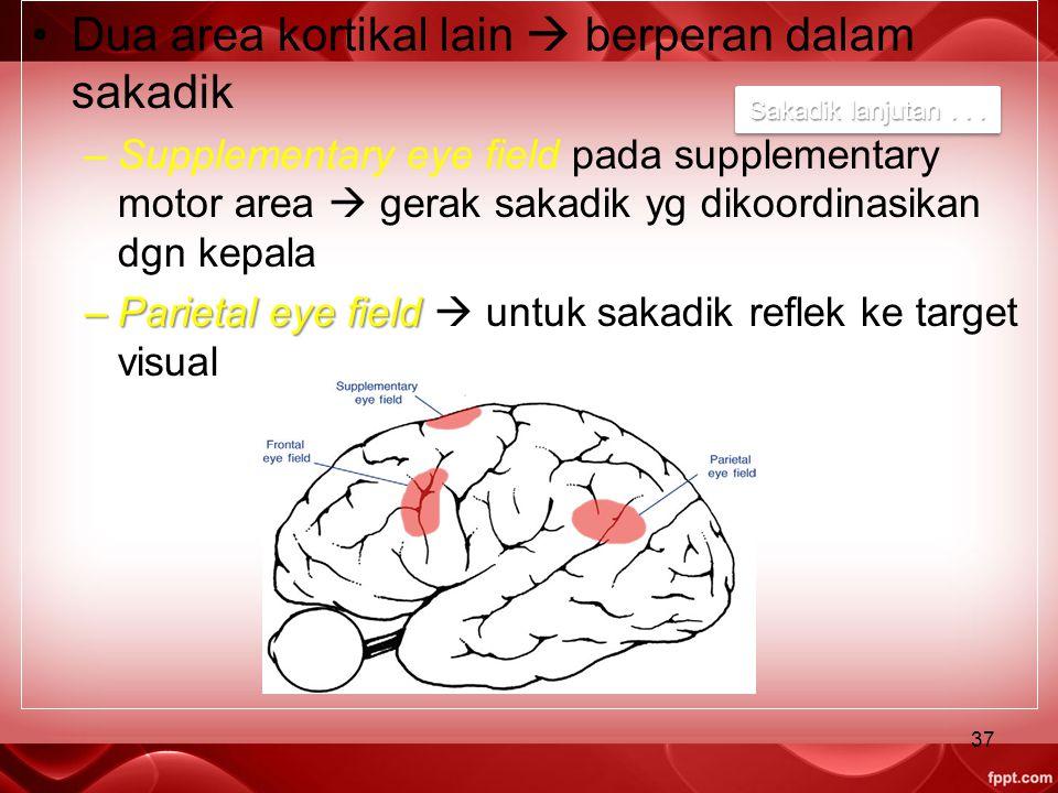 Dua area kortikal lain  berperan dalam sakadik