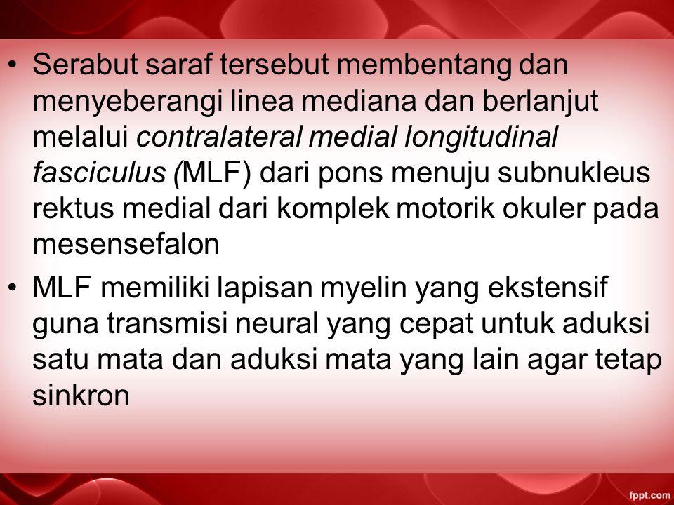 Serabut saraf tersebut membentang dan menyeberangi linea mediana dan berlanjut melalui contralateral medial longitudinal fasciculus (MLF) dari pons menuju subnukleus rektus medial dari komplek motorik okuler pada mesensefalon