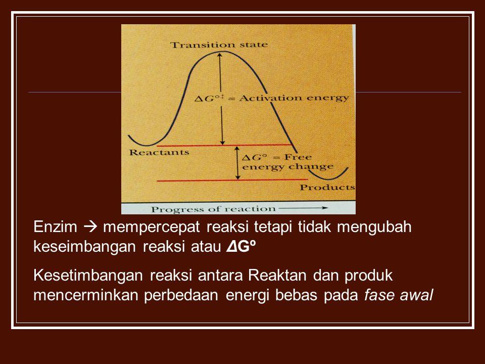 Enzim  mempercepat reaksi tetapi tidak mengubah keseimbangan reaksi atau ΔGº