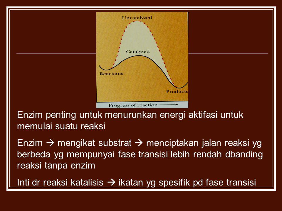 Enzim penting untuk menurunkan energi aktifasi untuk memulai suatu reaksi