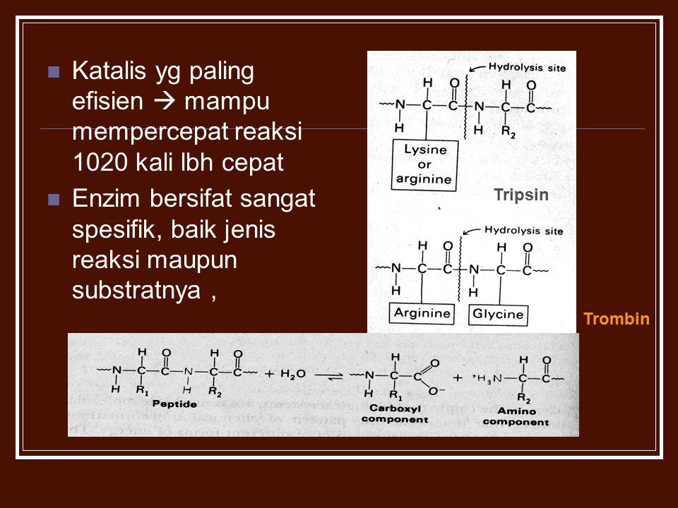 Enzim bersifat sangat spesifik, baik jenis reaksi maupun substratnya ,