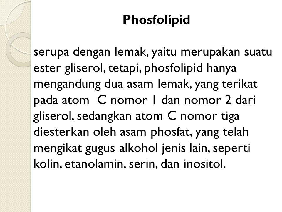 Phosfolipid