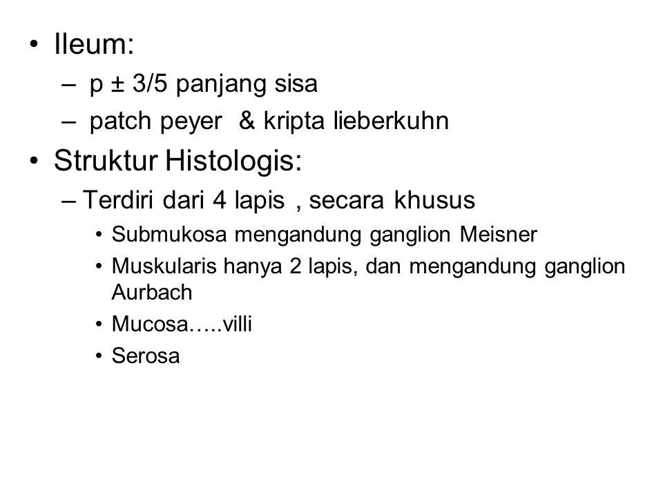 Ileum: Struktur Histologis: p ± 3/5 panjang sisa