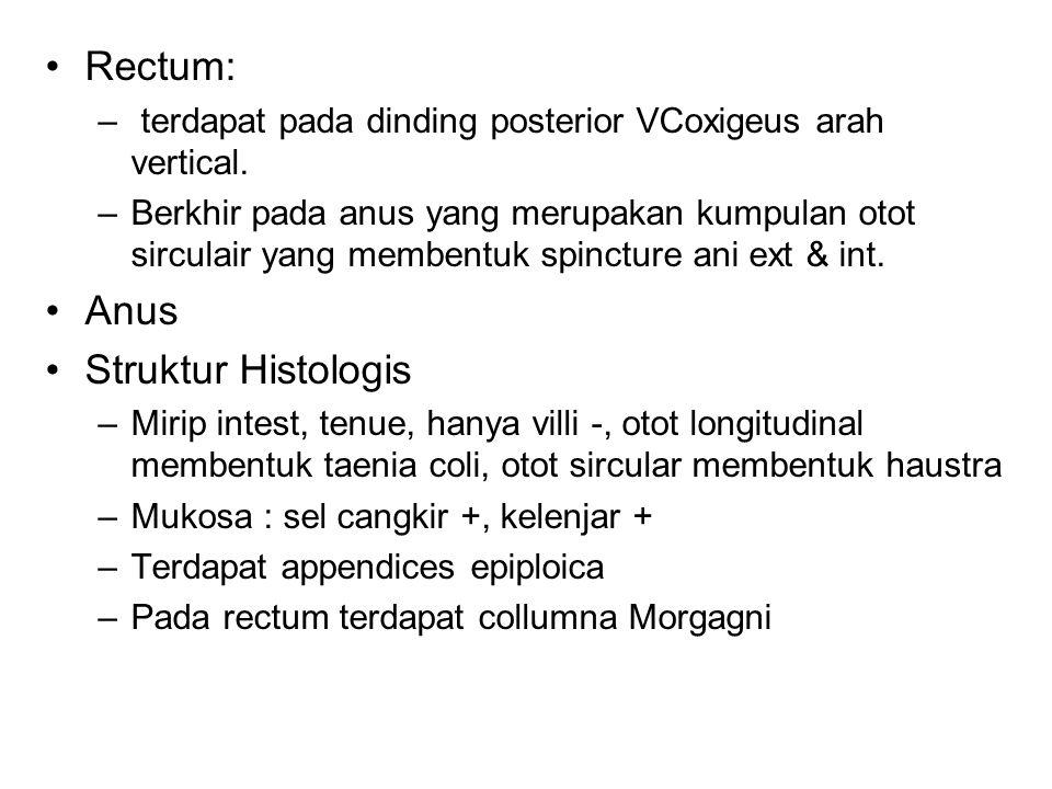 Rectum: Anus Struktur Histologis