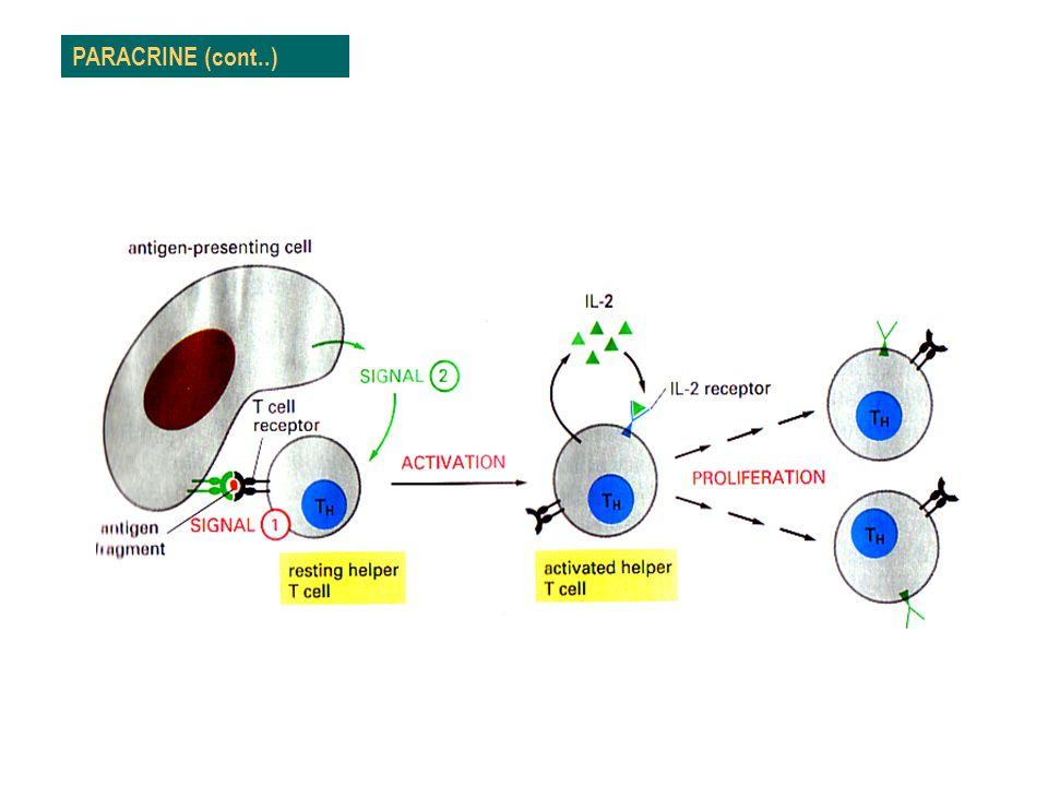Biologi Sel-Bio FST 4/9/2017 PARACRINE (cont..)