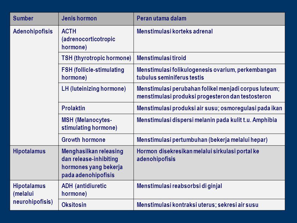 ACTH (adrenocorticotropic hormone) Menstimulasi korteks adrenal