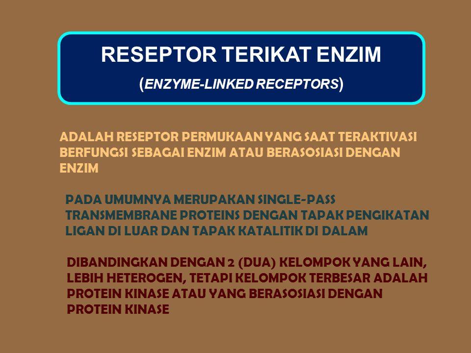 RESEPTOR TERIKAT ENZIM (ENZYME-LINKED RECEPTORS)