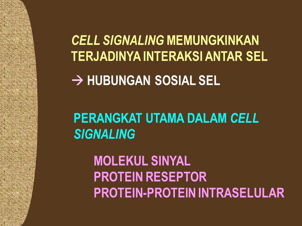 CELL SIGNALING MEMUNGKINKAN TERJADINYA INTERAKSI ANTAR SEL