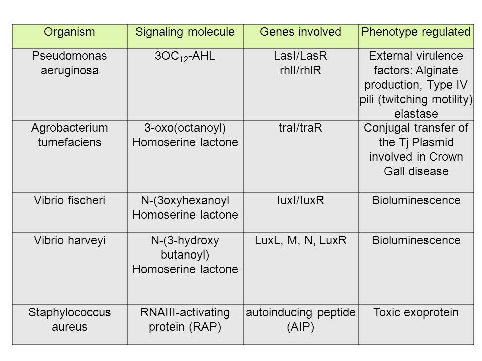 Pseudomonas aeruginosa 3OC12-AHL LasI/LasR rhlI/rhlR