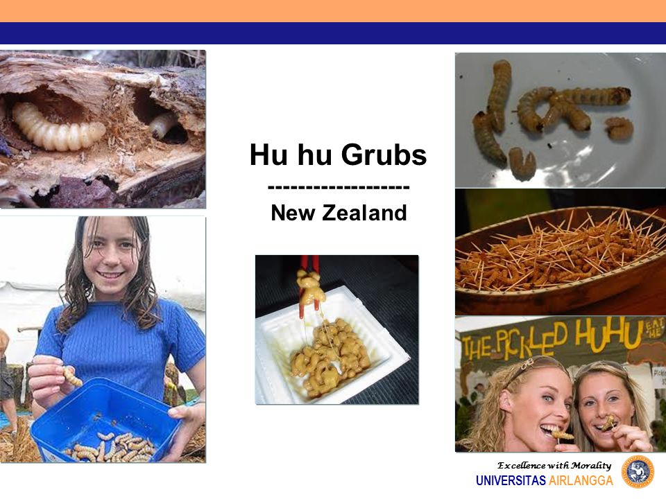 Hu hu Grubs ------------------- New Zealand UNIVERSITAS AIRLANGGA