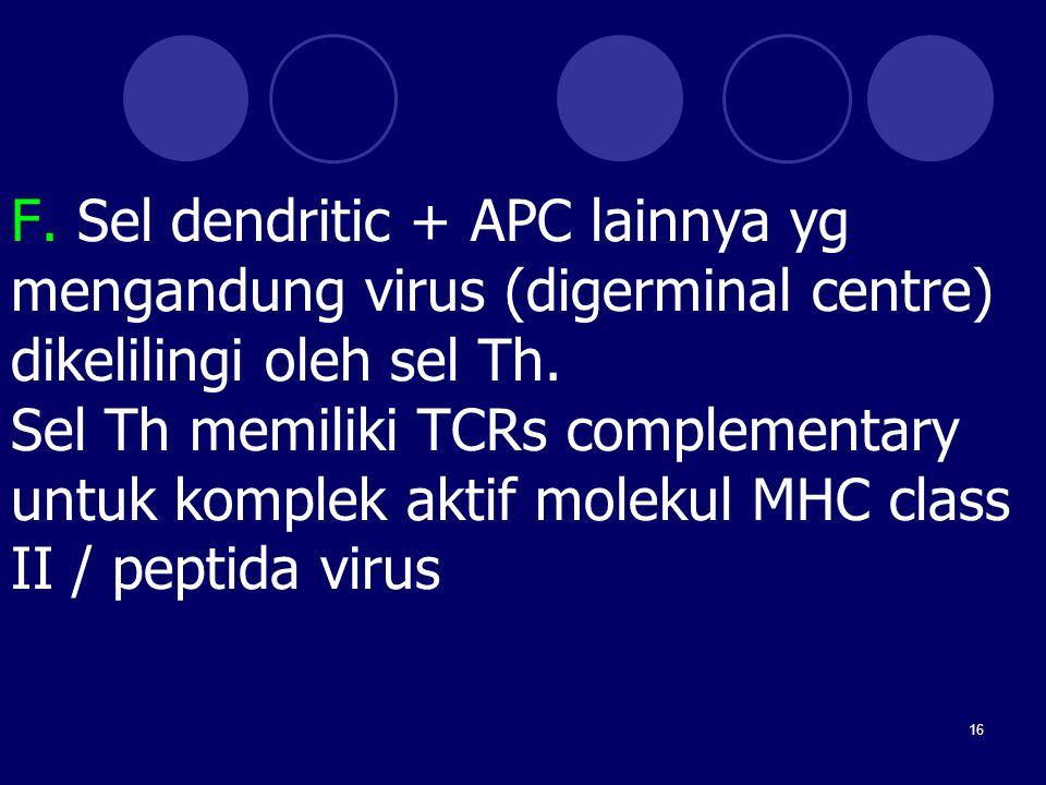 F. Sel dendritic + APC lainnya yg mengandung virus (digerminal centre) dikelilingi oleh sel Th.