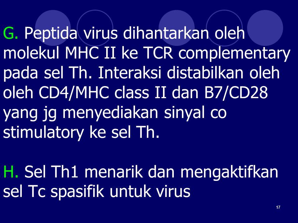 G. Peptida virus dihantarkan oleh molekul MHC II ke TCR complementary pada sel Th.