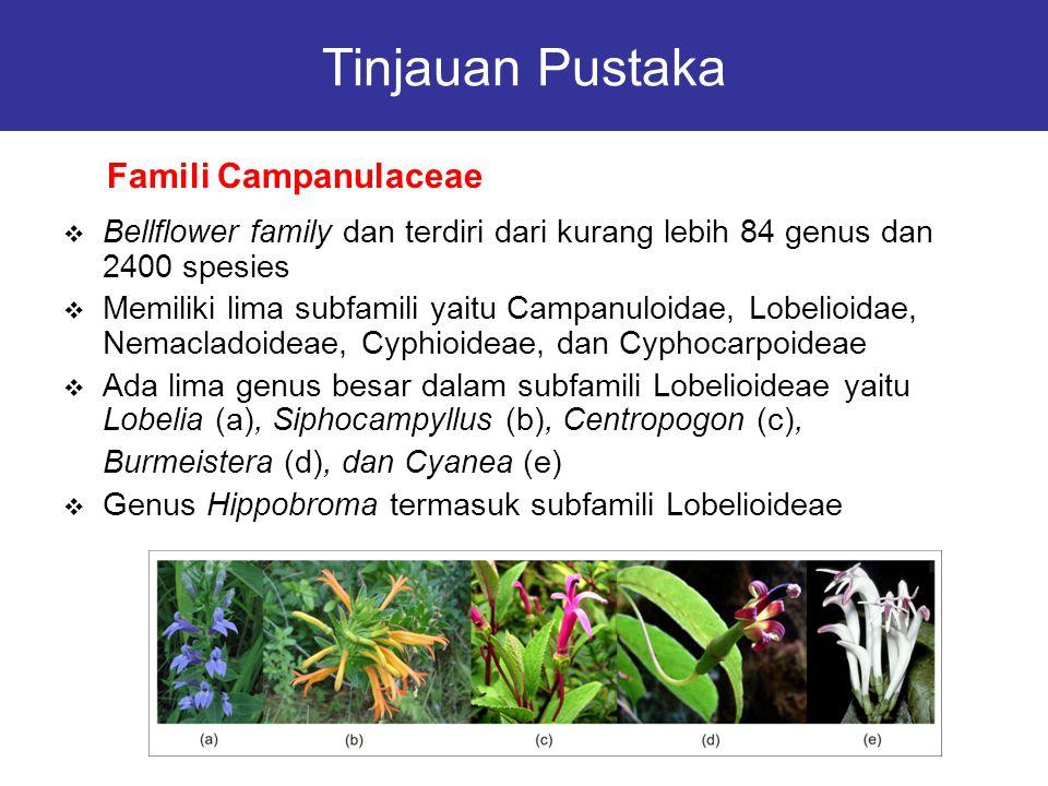 Tinjauan Pustaka Famili Campanulaceae