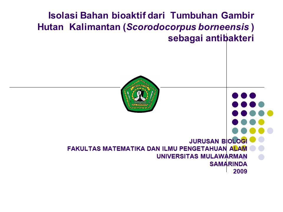Isolasi Bahan bioaktif dari Tumbuhan Gambir Hutan Kalimantan (Scorodocorpus borneensis ) sebagai antibakteri